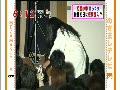 動画:めざましTV